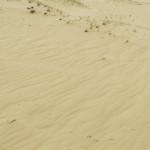 «Донская Сахара» — пустыня в Воронежской области